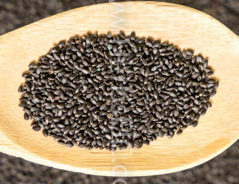 Basil seed, Basil seeds, basil herb
