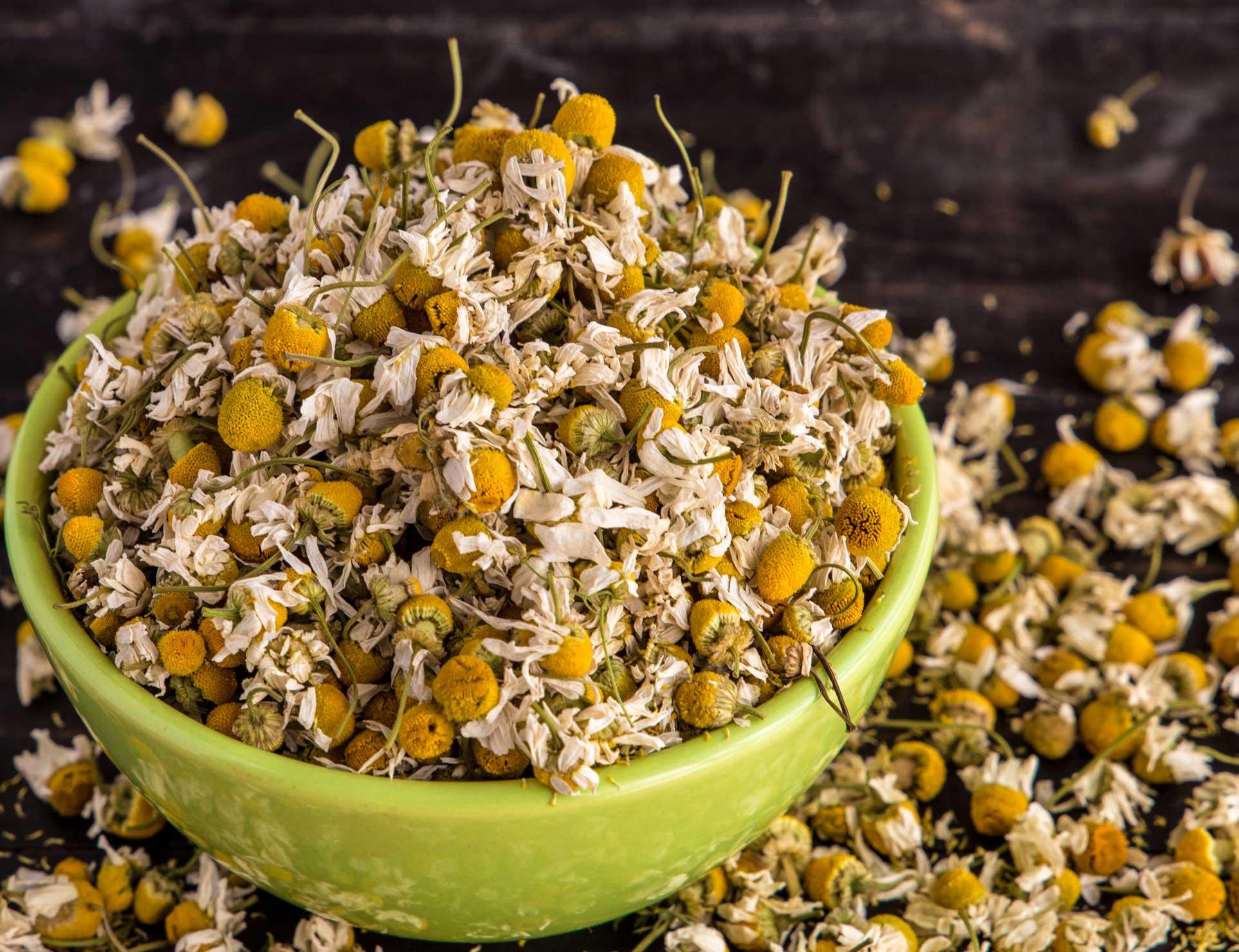 camomile flower, camomile, chamomilla