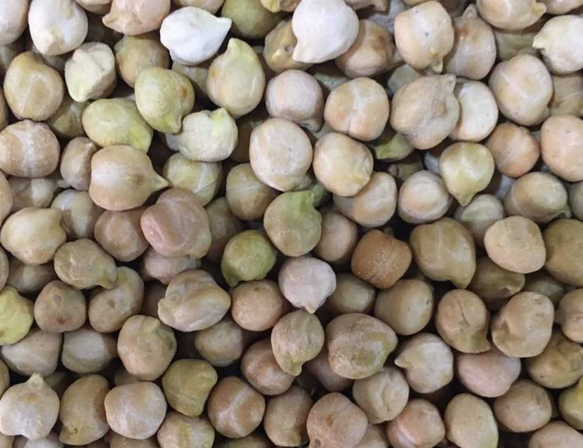 chick pea, Chickpeas, Chickpeas seed, hummus beans, hommos beans