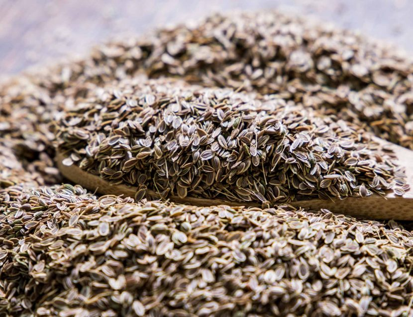 Dill seeds, Dried Dill, dill leaves - Anethum graveolens