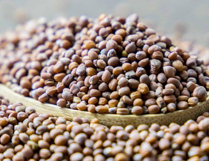 Radish, Radish seeds, Radishes