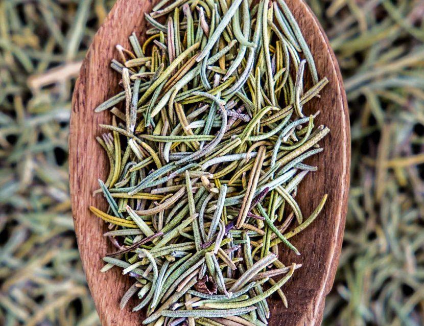Rosemary - Rosmarinus - Rosemary leaves, rosemary plant