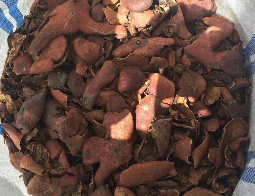 Pomegranate peel - Punica granatum